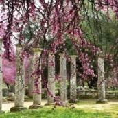 Αρχαία Ολυμπία: Εννέα μήνες χωρίς νυχτοφύλακα